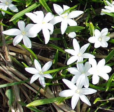 Декоративные растения и цветы